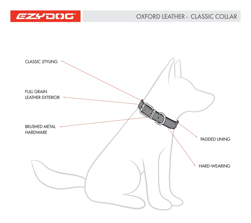 Dog Collar Diagram